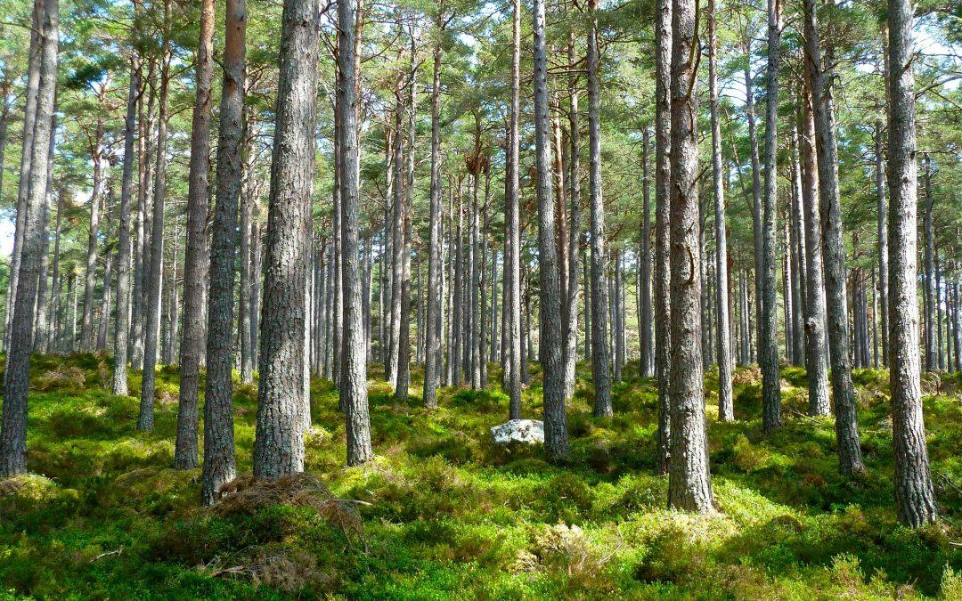 Научная тропа Клановицким лесом вас проведет историей места и замечательной природой