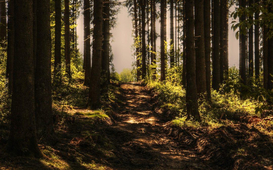 Познавательная тропа Баррандовские скалы – Хухельский гай: прогулочный маршрут, где можно пройтись и с коляской