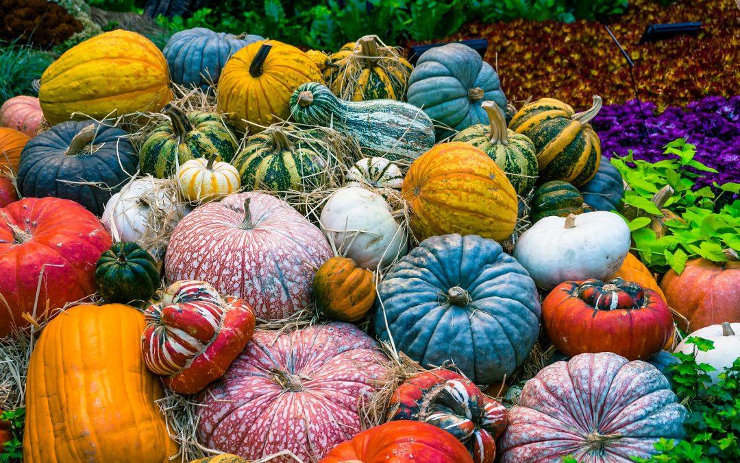 Тыквенный сезон в тройском Ботаническом саду: насладитесь деревенским колоритом в Праге!